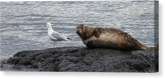 Common Seal And The Gull Canvas Print