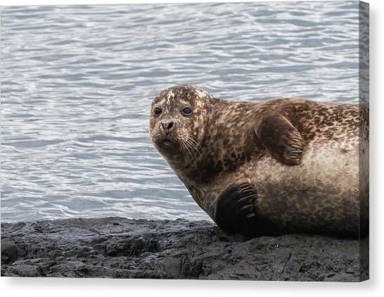 Common Seal Portrait Canvas Print