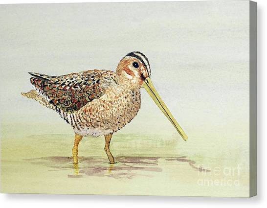 Common Snipe Wading Canvas Print