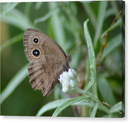 Common Wood Nymph Canvas Print