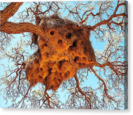 Community Weaver's Nest Canvas Print
