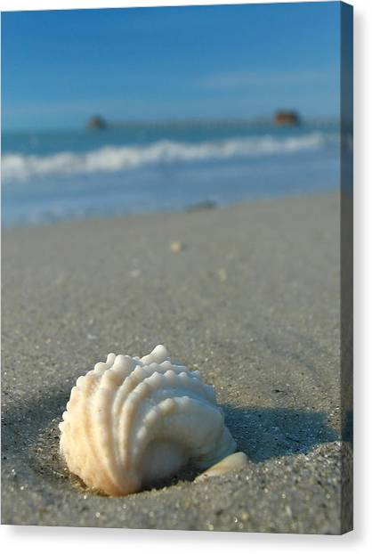 Conch Shells Canvas Print - Conch Shell by Juergen Roth
