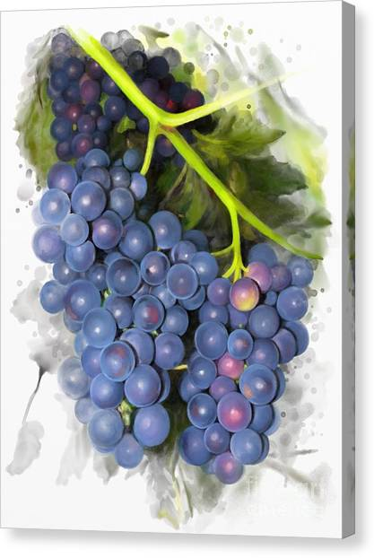 Concord Grape Canvas Print
