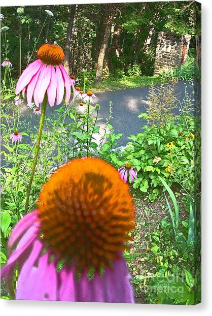 Cone Flowers And Others Canvas Print by Beebe  Barksdale-Bruner