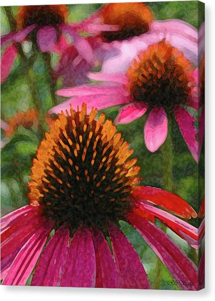 Cone Flowers Canvas Print