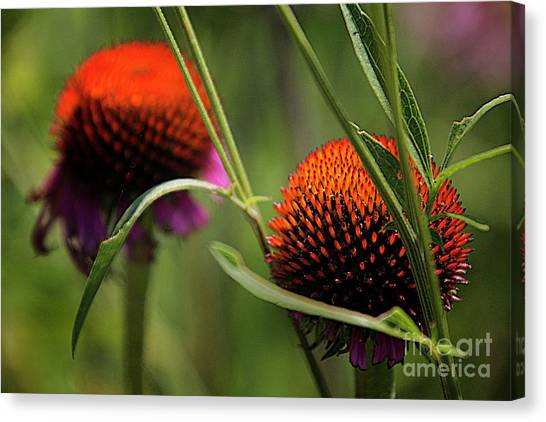 Coneflower Centers Canvas Print by Jim Wright