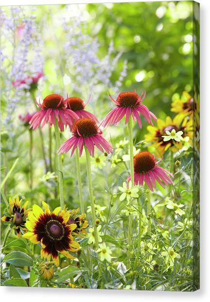 Coneflower Scene Canvas Print
