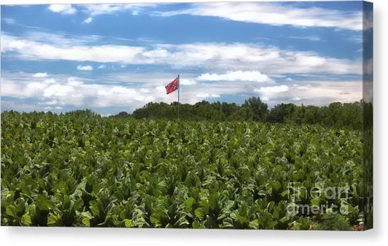 Confederate Flag In Tobacco Field Canvas Print