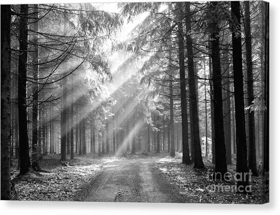 Conifer Forest In Fog Canvas Print