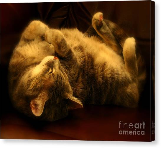 Contentment Canvas Print