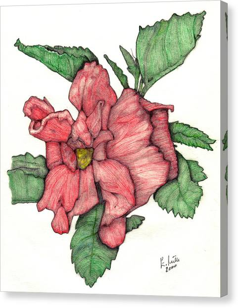 Contour Double Hibiscus Canvas Print by Edward Ruth
