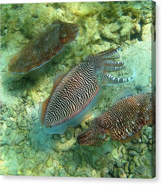 Squids Canvas Print - Convoy #camouflage #underwater by Abdullah Alnassrallah