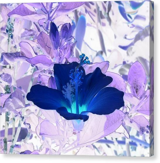 Cool Blue Hawaiian Hibiscus Canvas Print
