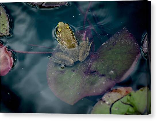 Cool Frog-hot Day Canvas Print