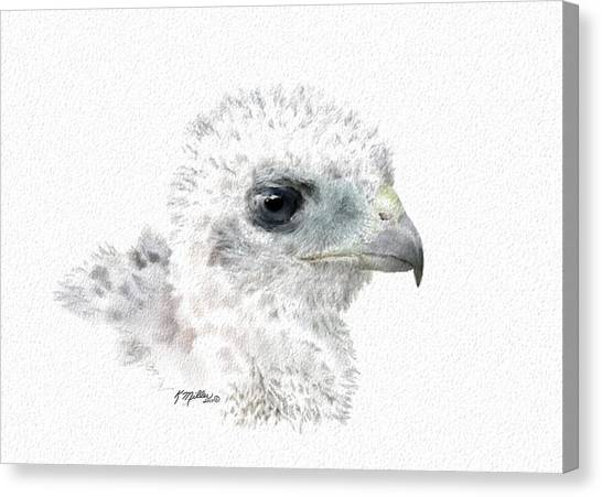 Coopers Hawk Chick Canvas Print
