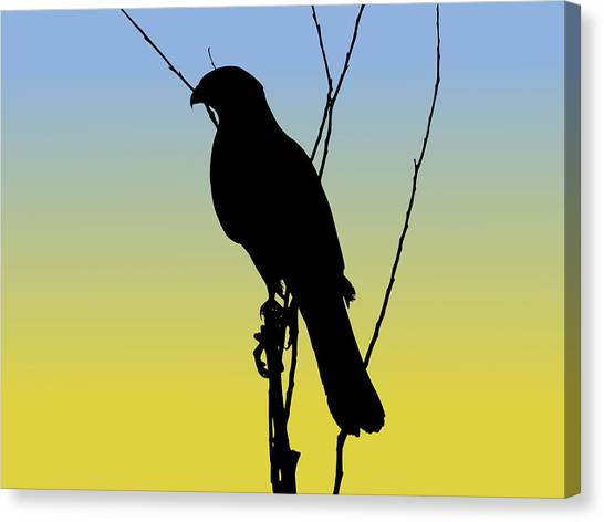 Coopers Hawk Silhouette At Sunrise Canvas Print