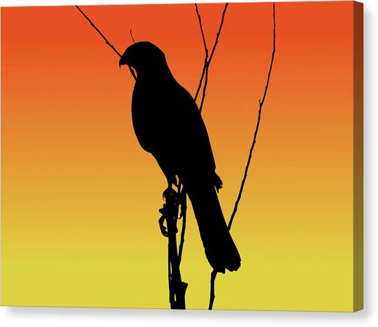 Coopers Hawk Silhouette At Sunset Canvas Print