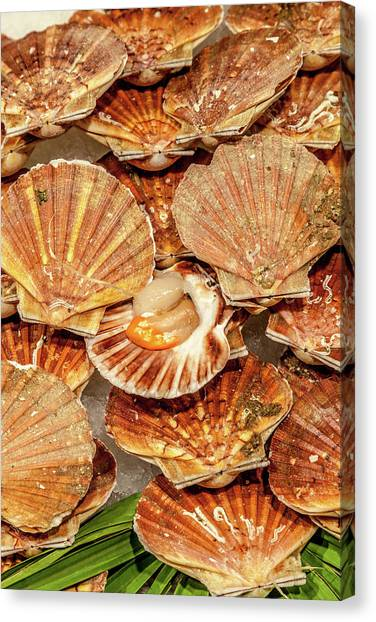 Fish Market Canvas Print - Coquilles Saint-jacques by W Chris Fooshee