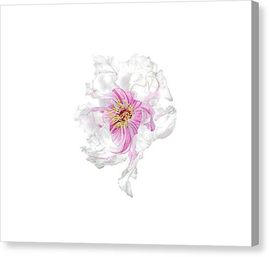Peony Canvas Print - The Dancing Peony by Kristen Somody Whalen