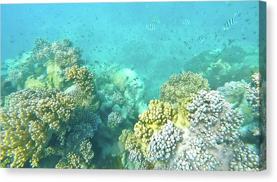 Canvas Print featuring the photograph Coral by Debbie Cundy