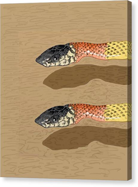 Coral Snakes Canvas Print - Coral Snakes   by David Michael Schmidt