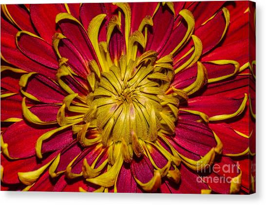 Core Of The Flower Canvas Print
