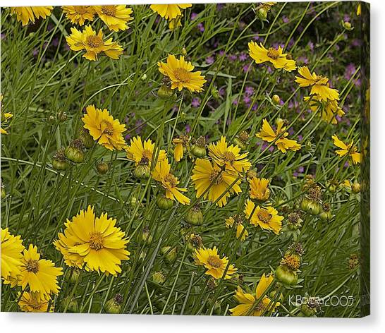 Coreopsis And Mexican Heather Canvas Print