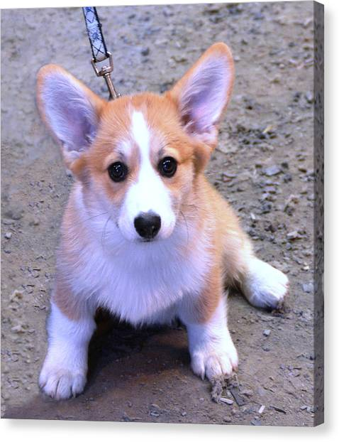 Corgi Puppy Canvas Print