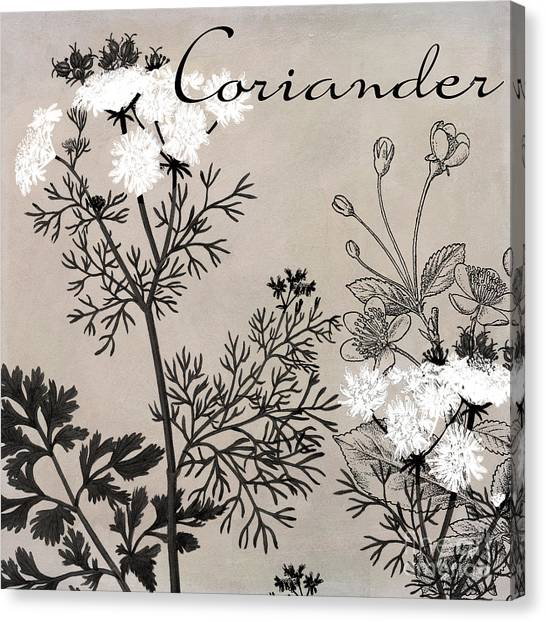 Dinner Table Canvas Print - Coriander Flowering Herbs by Mindy Sommers