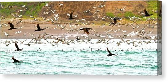 Cormorant Flight In Frenzy Canvas Print by Gus McCrea
