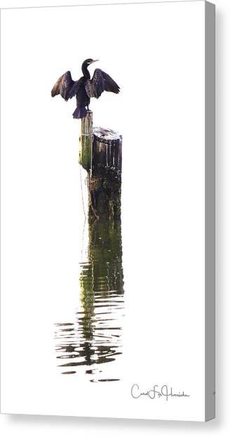 Cormorant Sunning Canvas Print