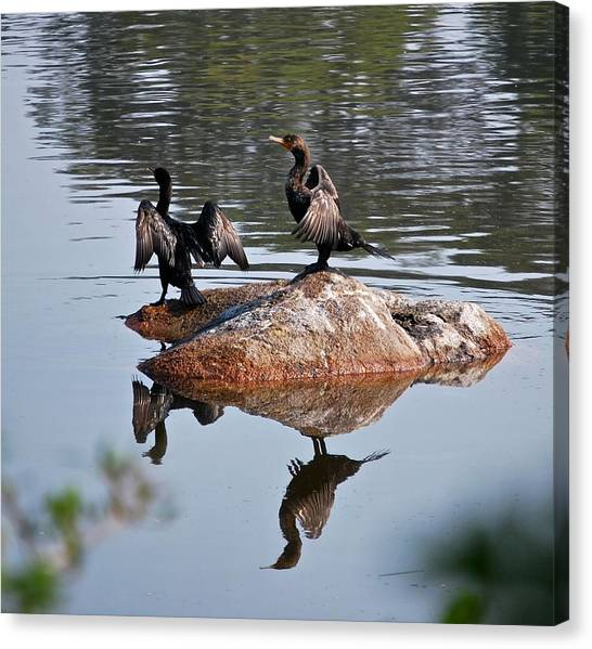 Cormorants Enjoying Warm Sun Canvas Print