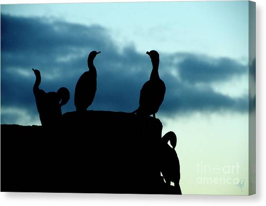 Cormorants In Silhouette Canvas Print