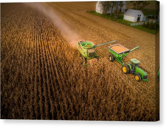 Corn Dust Canvas Print