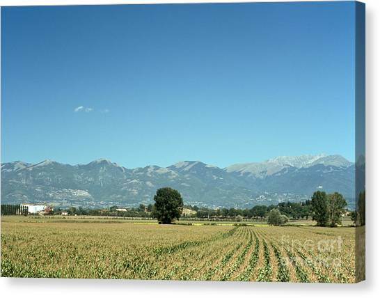 Corn Field With Terminillo II Canvas Print