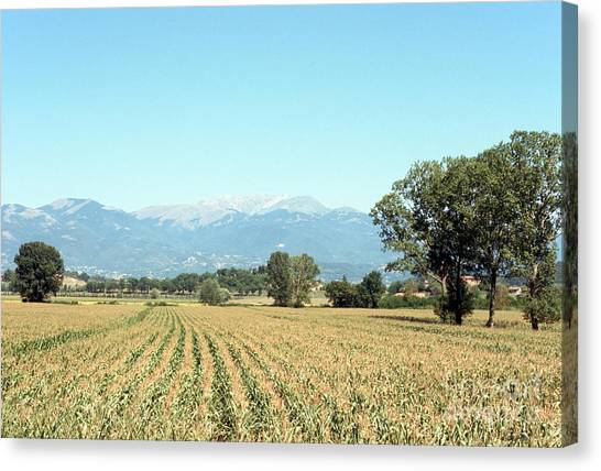 Corn Field With Terminillo Mount Canvas Print