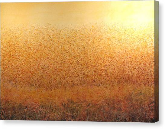 Corn Glow Canvas Print