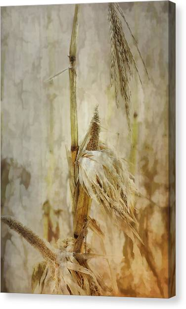 Vegetable Garden Canvas Print - Corn In Winter by Susan Capuano