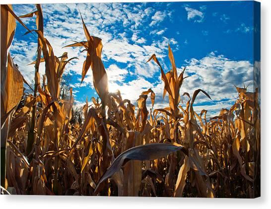 Corn Maze Canvas Print - Corn Maze 2 by Cathy Mahnke