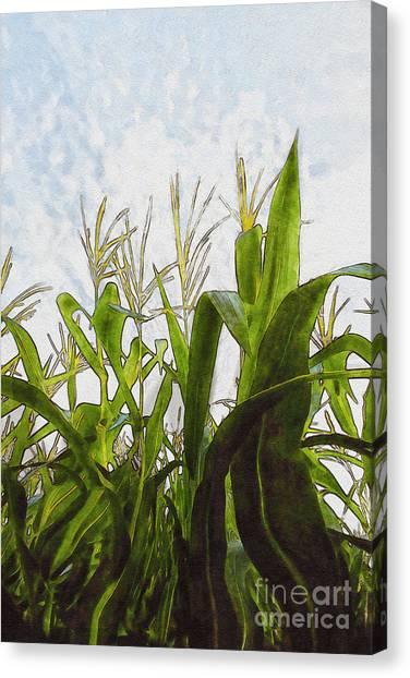Corn Maze Canvas Print - Landscape- Corn Maze by Feryal Faye Berber