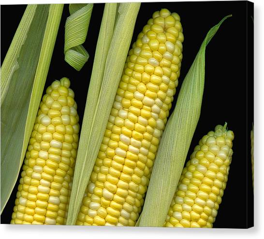 Ears Canvas Print - Corn On The Cob I  by Tom Mc Nemar