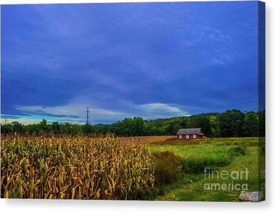 Corn Maze Canvas Print - Corn Stalk House by Jordan Erhardt