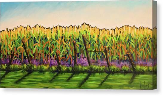 Cornfield Color Canvas Print