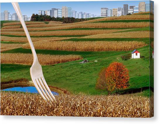 Cornfields With City Canvas Print