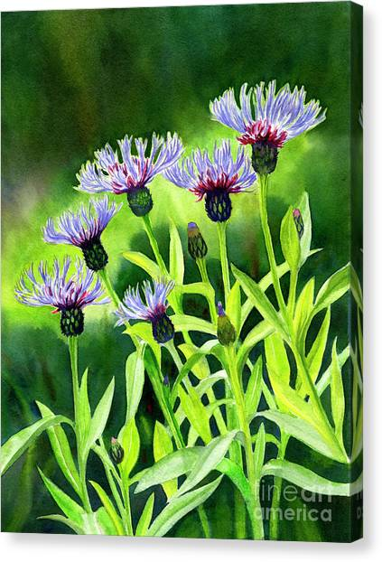 Bachelor Canvas Print - Cornflowers With Background by Sharon Freeman