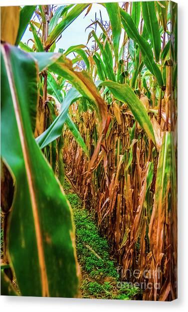 Corn Maze Canvas Print - Cornstalk Maze by Jordan Erhardt