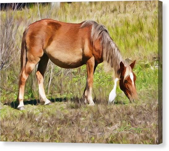 Corolla's Wild Horses Canvas Print