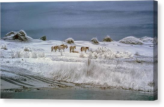Corrola Wild Horses Canvas Print