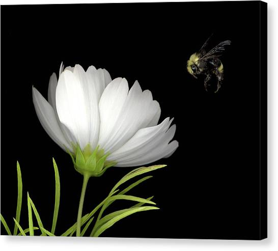 Cosmo And Bee Canvas Print by Sandi F Hutchins