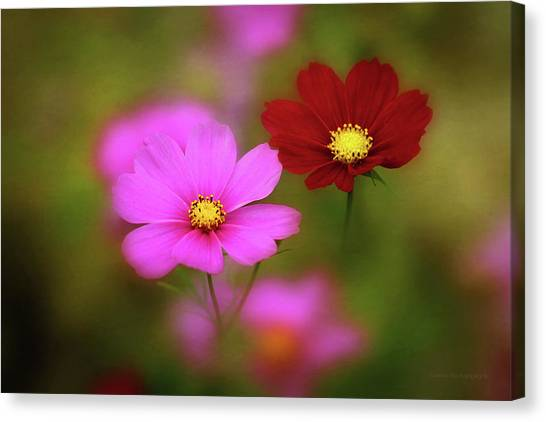Cosmo flowers blowing in the wind photograph by maria angelica maira cosmo flowers blowing in the wind canvas print by maria angelica maira mightylinksfo